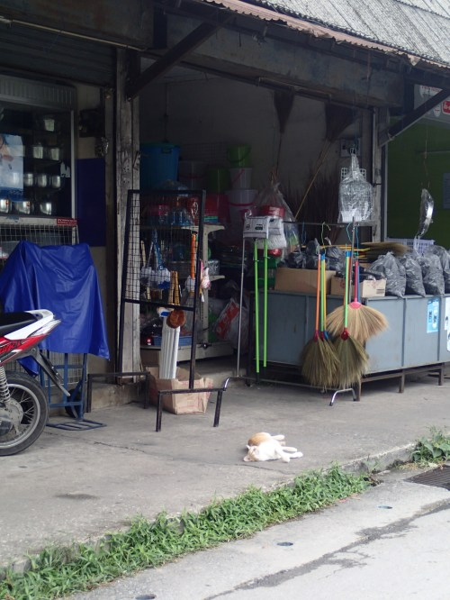 An everyday shop front - the cat is not for sale!