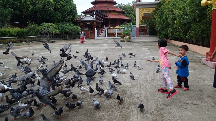 Feeding the pigeons at the temple