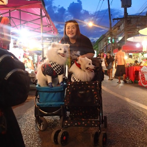 The growing bizarre trend of dogs in strollers