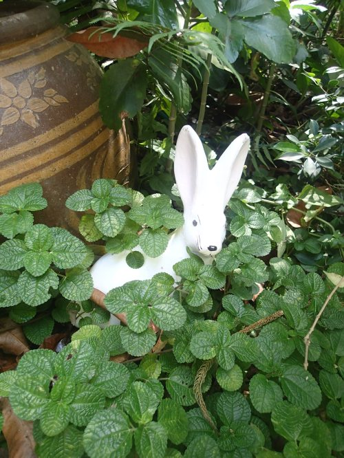 White rabbits, white rabbits, white rabbits